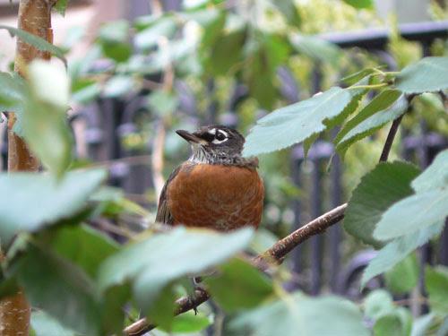 oiseau à NY.jpg
