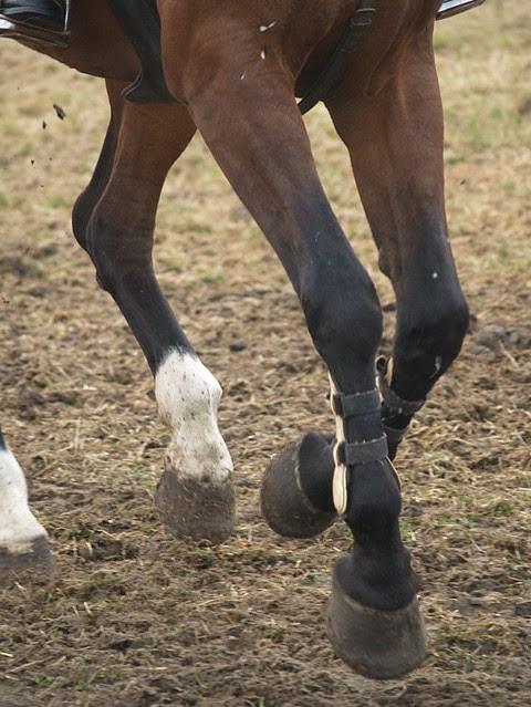 horse jumping V
