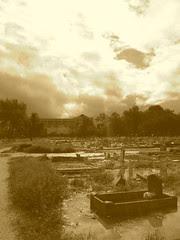 Holt Cemetery Sepia