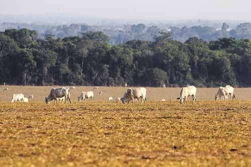 Pastagem para gado em fazenda na fronteira com a Amazônia: para os cientistas, a derrubada de árvores já prejudicou permanentemente algumas partes da floresta (Paulo Whitaker/Reuters - 23/9/11)