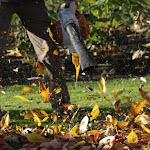 הסוף לרעש המפוחים? מסתמן: העירייה תוותר על שימוש בהם במסגרת הסכם פשרה - השקמה חולון