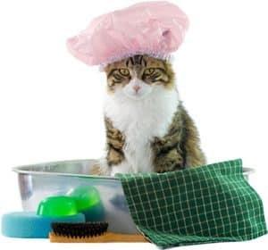 Kebersihan adalah kenyamanan yang didambakan semua makhluk hidup ya sobat 10 Fungsi Grooming pada Kucing