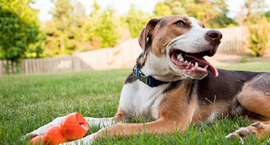Keeping Pets Safe from Outdoor Dangers - DIYControls Blog