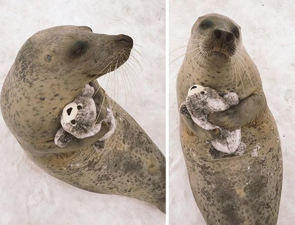 φωτογραφίες ζώων αγκαλιά 40 υπέροχες φωτογραφίες ζώων αγκαλιά με αρκουδάκια που θα σας ζεστάνουν την καρδιά