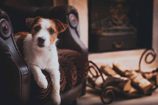 Should You Allow Pets in Your Rental Property | Pros and Cons