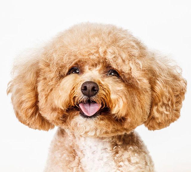Retratos de cães cheios de personalidade 01