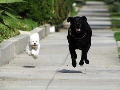 Importancia del ejercicio en perros para una buena salud