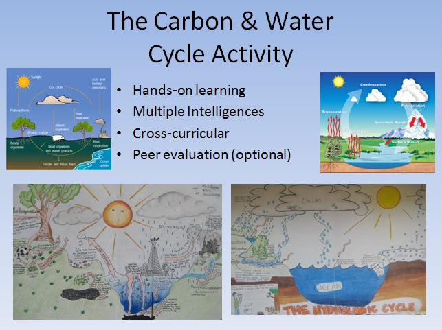 Water and Carbon Cycle Diagrams Activity