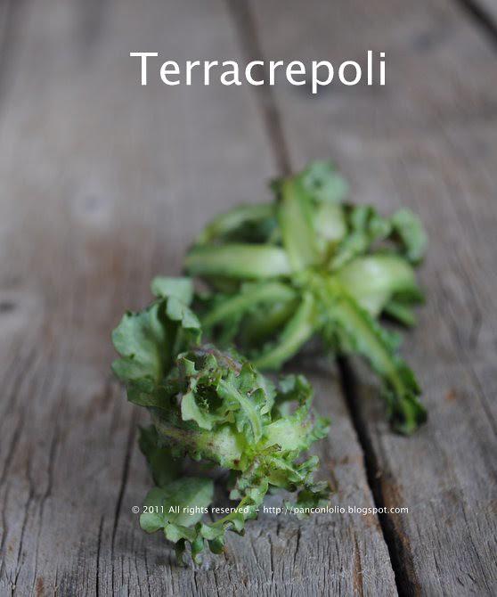 Erbette selvatiche: terracrepoli