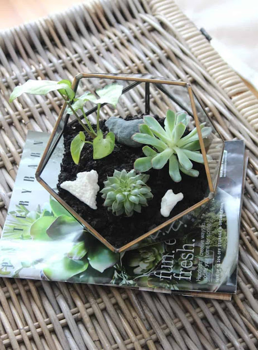 How To Put Together A Terrarium - Shine Your Light