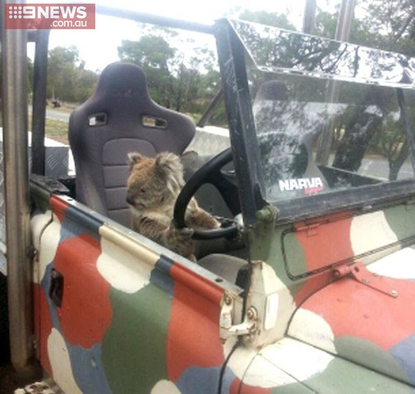 Paws on the wheel. (9NEWS)