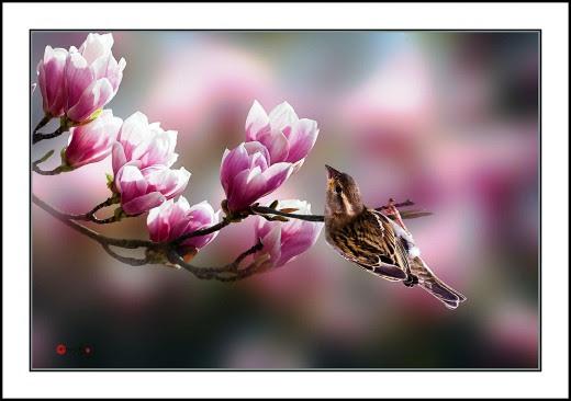 015 Tulip