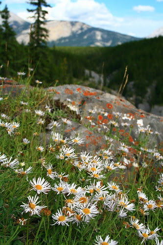 Mountainside Meadow (SOTC 61/365) by gina.blank