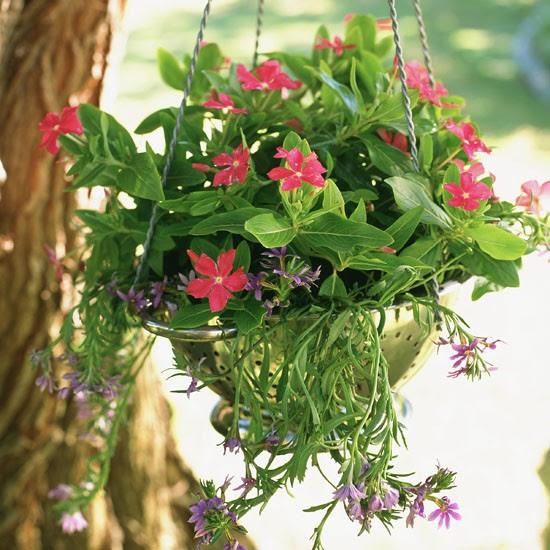 hangingbasket.jpg (550×550)