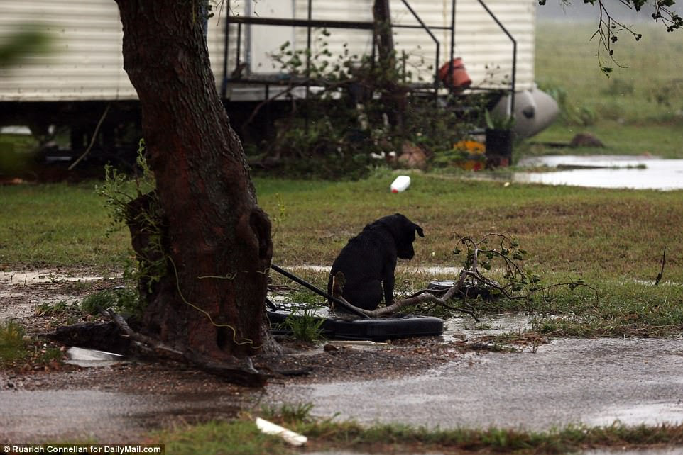 Un autre chien a été vu enchaîné à un arbre à l'extérieur d'une maison mobile à Victoria samedi, également apparemment abandonné