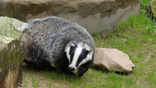 Dark Democracy (With a Badger) – Newsnibbles