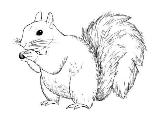 eichhörnchen malen vorlage