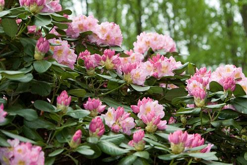 May Garden Roundup