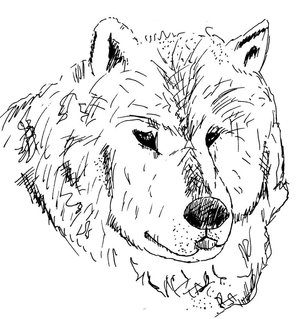 Dessin coloriage animal tete de loup