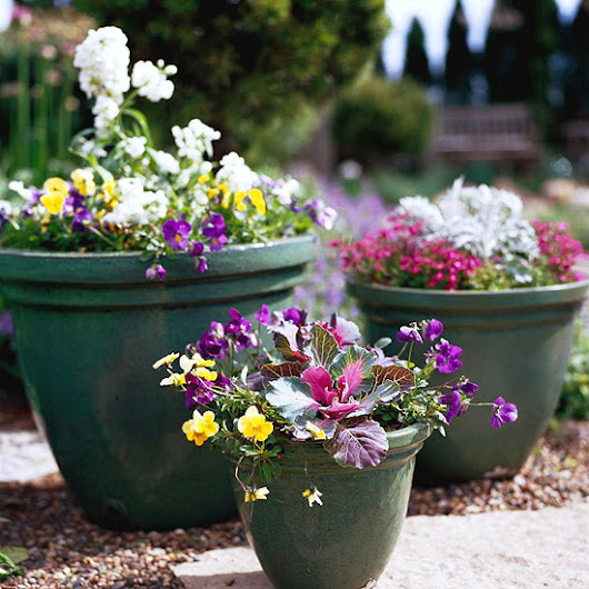 Cool-Season Containers