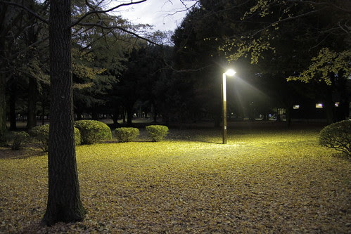 Yoyogi Park illuminated by lone light