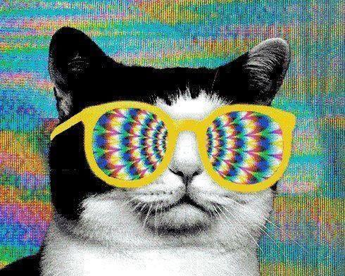 gato psicodélico