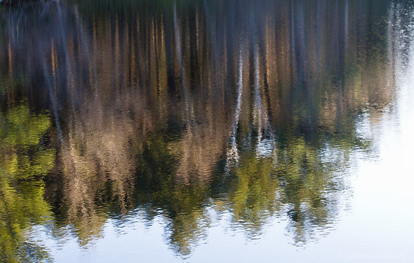 reflection, trees in a pond