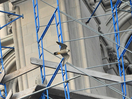Riverside Church Falcon
