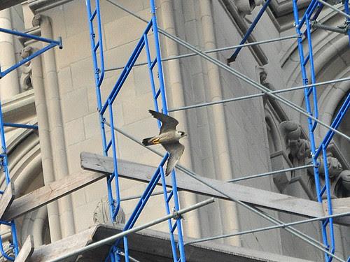 Riverside Church Falcon