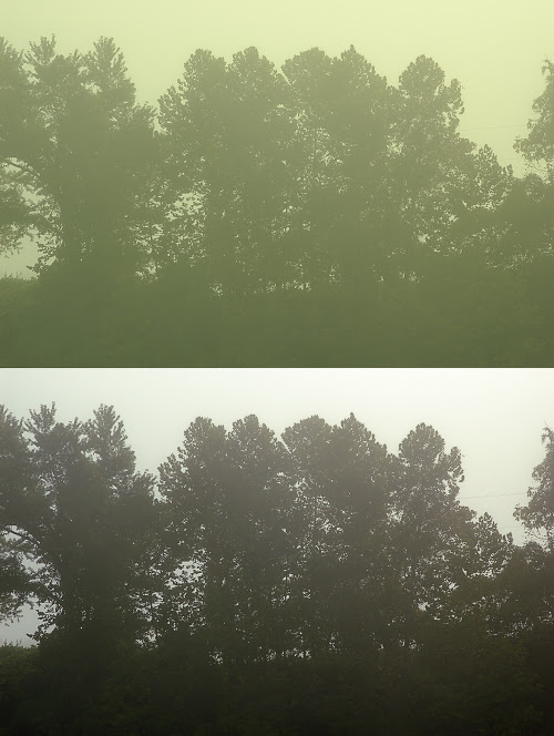 Trees with Auto Levels
