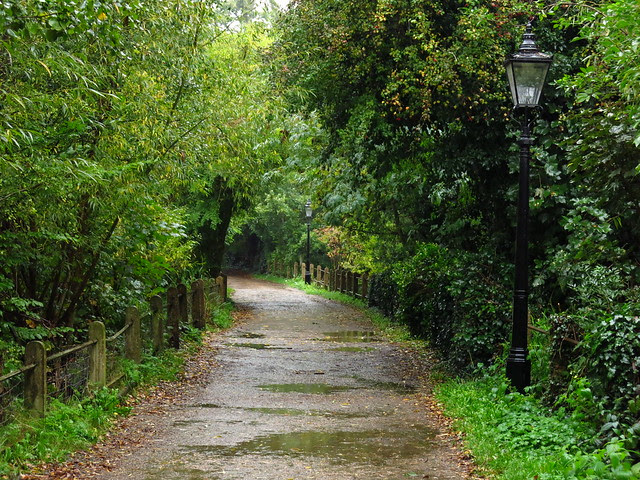 Rainy Path by the Vale of Health Pond
