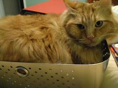 Jasper in the metal basket