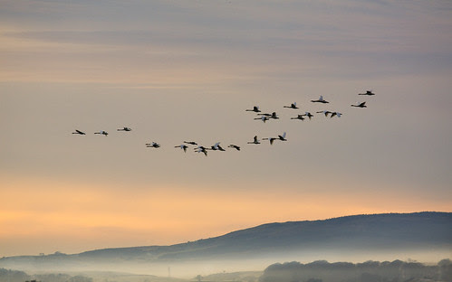 The Whoopers are back by looksee57