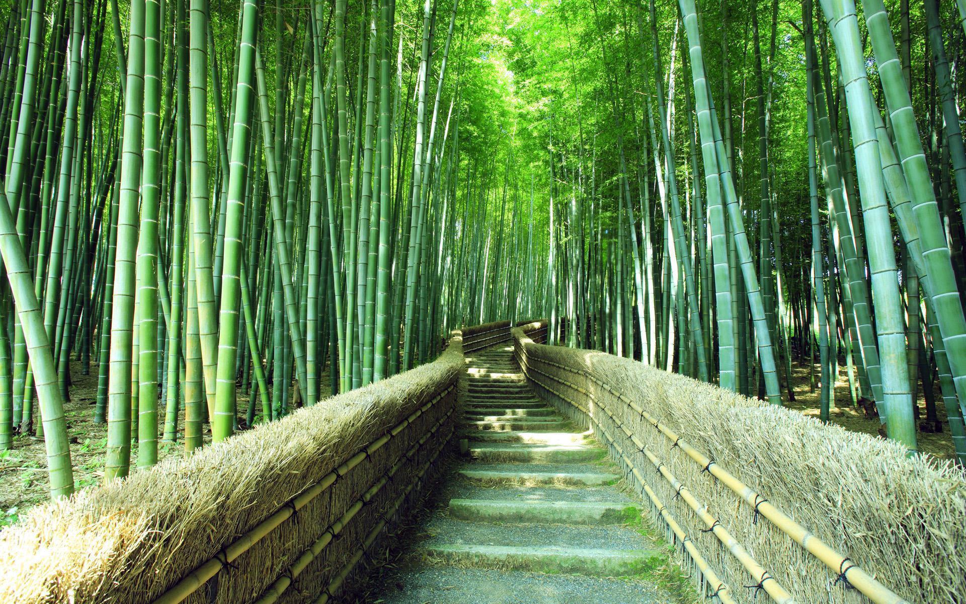 Jalan Wallpaper Bambu Hutan Pemandangan Hijau Hd Layar Lebar