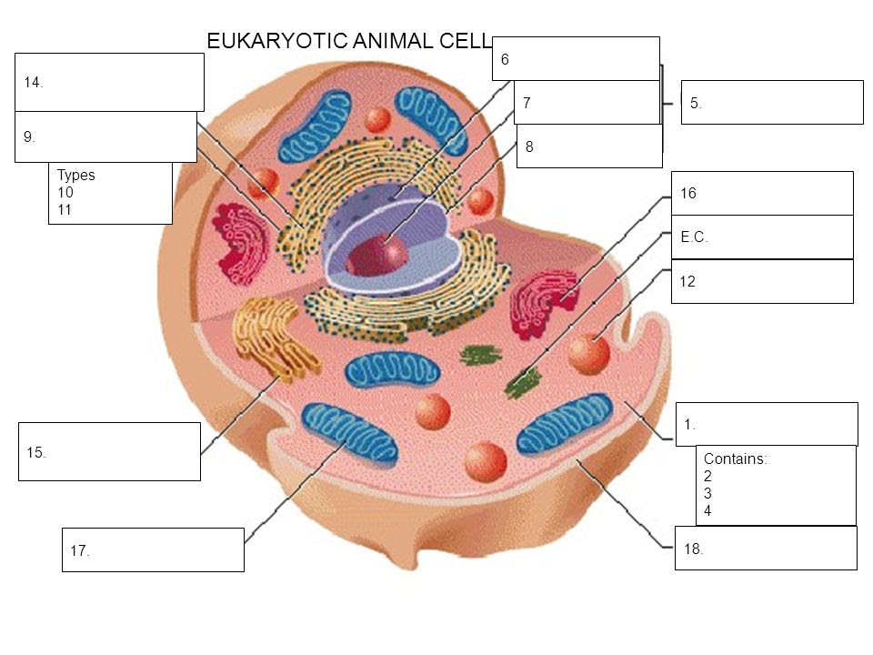 human cell drawing 53