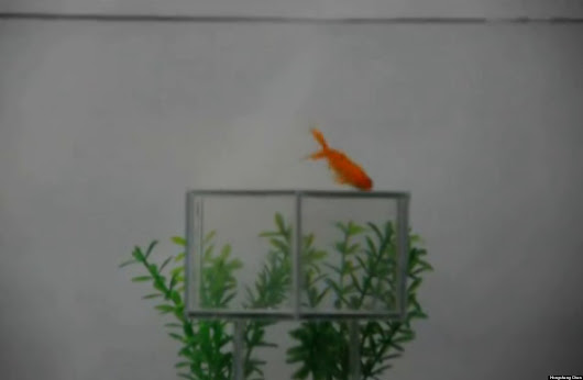 'Invisibility Cloak' Shields Fish And Cats From View (VIDEO)
