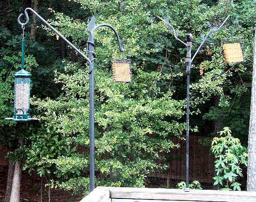 New bird feeder setup