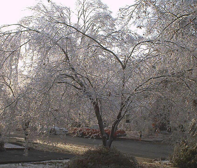 abcwed icetree2002