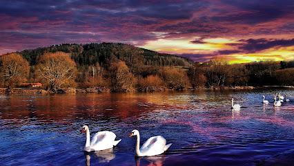 Αποτέλεσμα εικόνας για swans in love sunset