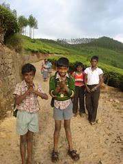 children of tea