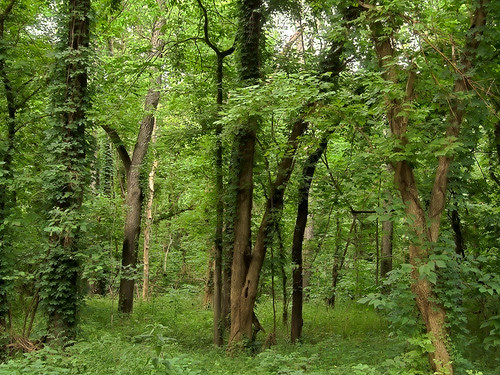 Bottomland forest at Castlewood State Park, in Ballwin, Missouri, USA 4