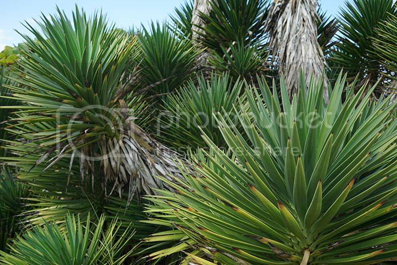 Puerto Rico, Waterfall, Tropical, Beach, Palm trees, Contax G2, Film, 35mm, holiday, vacation, travel, photo Plants_zpsuvj9x6bu.jpg