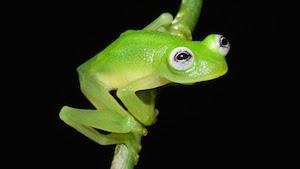 kermitfrog_300