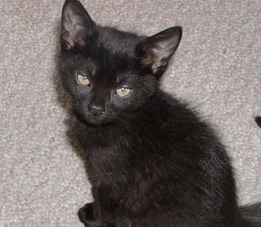 #TakeMeHomeTuesday - Great news, and more awesome kitties available for adoption!