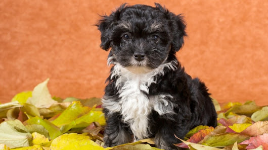 Find out who's 'top dog' on most popular puppy name list for 2014