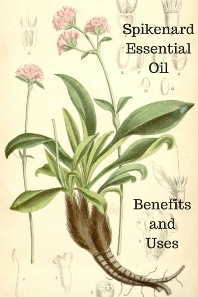 Spikenard Essential Oil Benefits and Uses In Aromatherapy