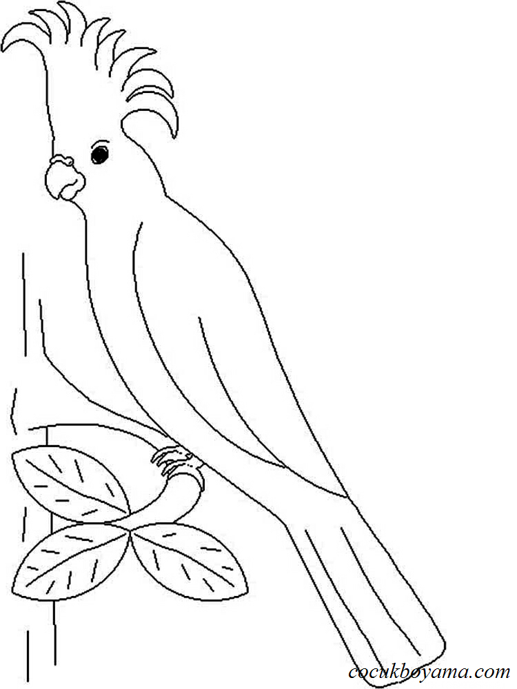 Muhabbet Kuşu 12 ücretsiz Boyama Resimleri