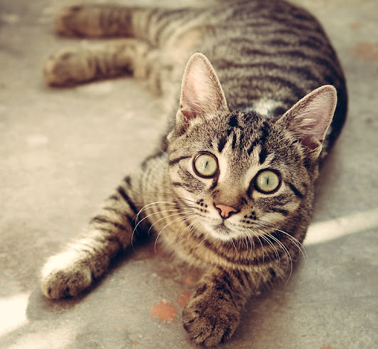 8 Green Cleaning Tips for Cats and Their People