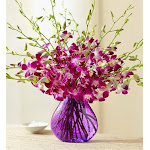 Flower Delivery by 1-800 Flowers Exotic Breeze Orchids 20 Stems with Purple Vase Flowers, Medium
