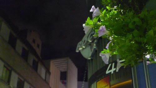 Flowers at the street of Shinjuku